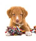 Wall calendar Puppies 2022