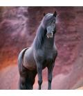 Wall calendar Horses – Christiane Slawik 2022