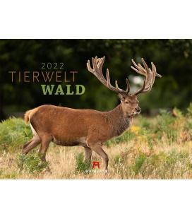 Wall calendar Tierwelt Wald Kalender 2022