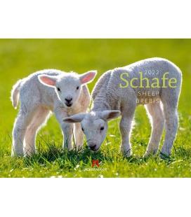 Wall calendar Schafe Kalender 2022