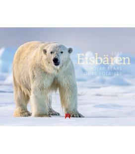 Wall calendar Eisbären Kalender 2022