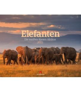 Wall calendar Elefanten Kalender 2022