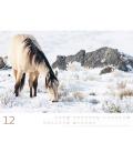 Wall calendar Wilde Pferde Kalender 2022