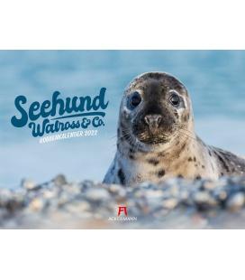 Wall calendar Seehund, Walross & Co. Kalender 2022