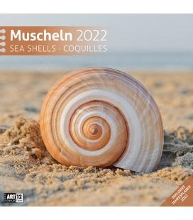 Wall calendar Muscheln Kalender 2022