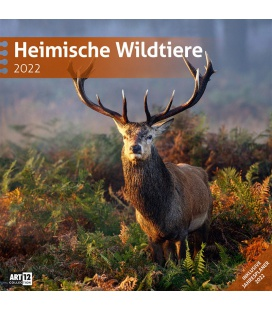 Wall calendar Heimische Wildtiere Kalender 2022