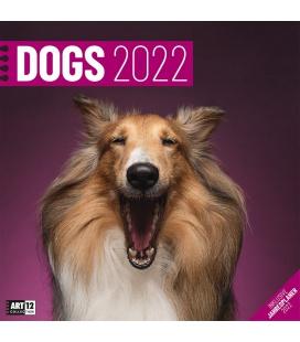 Wall calendar Dogs Kalender 2022
