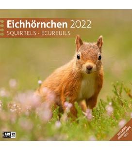 Wall calendar Eichhörnchen Kalender 2022