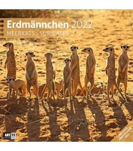 Wall calendar Erdmännchen Kalender 2022